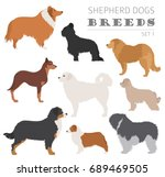 shepherd dog breeds  sheepdogs... | Shutterstock .eps vector #689469505