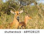 Buck Head Horns Wildlife Anima...