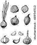 onion and garlic. hand drawn... | Shutterstock .eps vector #68954512