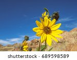 close up of black eyed susan... | Shutterstock . vector #689598589