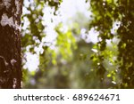 Small photo of Left aligned birch bokeh background