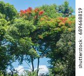 Small photo of A lush forest in the Dominican Republic countryside, including a an African Tulip Tree (Spathodea campanulata) with bright orange flowers.