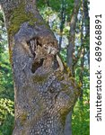 Grey Squirrel Up In Tree Next...