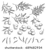 olive sketch element collection ... | Shutterstock .eps vector #689682934