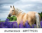 portrait of a palomino horse... | Shutterstock . vector #689779231