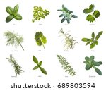 herb leaves close up | Shutterstock . vector #689803594
