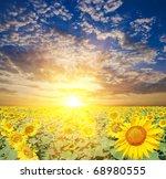 sunset on a sunflower field   Shutterstock . vector #68980555