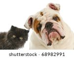 Stock photo dog and cat persian kitten and english bulldog looking at viewer 68982991