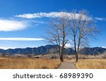 Two Tall Trees Stand Over A...