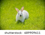 Stock photo white rabbit on a grass background 689909611