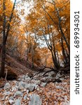 nature at autumn. forest and... | Shutterstock . vector #689934301