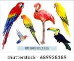Stock vector vector hand drawn collection of beautiful exotic tropical birds isolated on white background 689938189