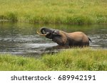Small photo of African forest elephant in the nature habitat of agreen meadow and water. The Elephant Forest,Loxodonta cyclotis is a small species of elephant living in the tropical rainforest of West Africa.