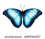 single blue butterfly morpho on ... | Shutterstock .eps vector #689946307