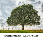nature background with tree and ... | Shutterstock . vector #689975035