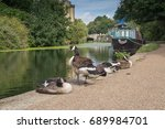 Small photo of Geese relax next to Regent's Canal, London, UK