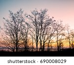 autumn trees silhouette at... | Shutterstock . vector #690008029