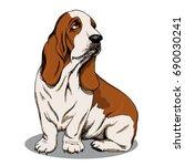 Basset Hound. Color Sketch