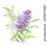 spring flowers lilac and bird... | Shutterstock . vector #690037087