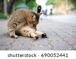 A Cat Washing Its Belly With...