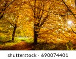 sun shining through a forest on ... | Shutterstock . vector #690074401