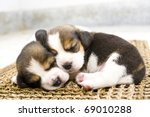 Stock photo puppy cute beagle 69010288
