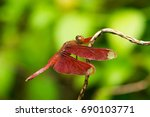 red dragonfly portrait | Shutterstock . vector #690103771