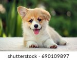 Stock photo dog welsh corgi pembroke puppy smile 690109897