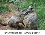 discussion of two bat eared... | Shutterstock . vector #690114844