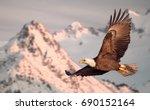 American Bald Eagle In Flight...