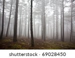 Mysterious Foggy Forest In...