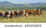 cattle | Shutterstock . vector #690292855
