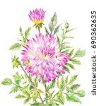 yellow pink large dahlia ...   Shutterstock . vector #690362635