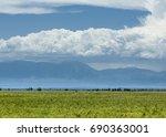 steppe  prairie  veld  veldt....   Shutterstock . vector #690363001