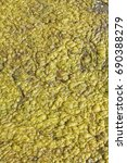 Small photo of green-yellow algae in a pond