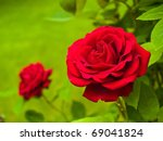 Stock photo red rose on the branch in the garden 69041824
