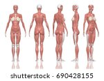 human anatomy female muscles.... | Shutterstock . vector #690428155