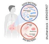 probiotics. gut flora  good ...   Shutterstock .eps vector #690435907