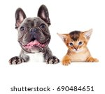 Stock photo kitten and dog peep out 690484651