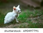 the white kitten | Shutterstock . vector #690497791