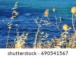 Dry Blur Yellow Dry Plants...