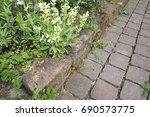 ruin lizard  wall lizard ... | Shutterstock . vector #690573775