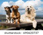 Three Amigos   Three Dogs On A...