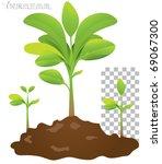 seedling | Shutterstock .eps vector #69067300