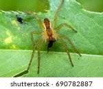 a spider on a green leaf with... | Shutterstock . vector #690782887