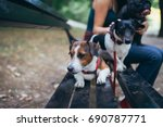 Stock photo dog walker with dogs enjoying in park 690787771