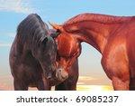 two communicating horses   Shutterstock . vector #69085237