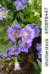 blue and purple flowers of... | Shutterstock . vector #690898447