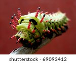 Spiky caterpillar against red wall - stock photo