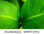 Close Up Of Fresh Green Leaf A...